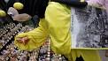 301. Platz | Halbmarathon | Die Bienchen sind los (1045) | Am Naschmarkt