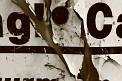 Momo H. (325) - ∅ 6.50