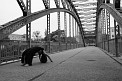 59. Place | Marathon | Sabine N. (822) | Brücke