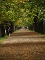 239. Platz | Halbmarathon | planPHASE[r] (999) | Samstags in Wien