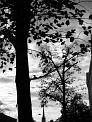 29. Place | Marathon | Andrea P. (228) | Silhouetten