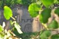 118. Place | Halbmarathon | Nina S. (1017) | im Burggarten