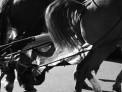 56. Place | Marathon | Harald V. (1034) | mehr Menschlichkeit für Tiere