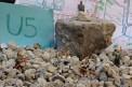 163. Platz | Marathon | Damir R. (1043) | es wird gebaut