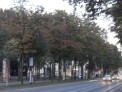 674. Platz | Halbmarathon | Peter E. (1236) | herbstliches Wien