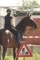 desperate horsewifes (1241) - ∅ 5.00