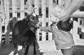 64. Platz | Marathon | Hubert F. (1348) | mehr Menschlichkeit für Tiere