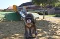 602. Platz | Halbmarathon | Michna (1354) | am Spielplatz
