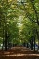 265. Place | Marathon | Rupert R. (233) | herbstliches Wien