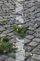 27. Platz | Marathon | Wolfgang B. (310) | Stein-steinig