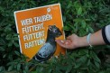 472. Place | Halbmarathon | Salat Dressing (330) | mehr Menschlichkeit für Tiere