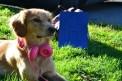 228. Platz | Halbmarathon | Paula H. (34) | mehr Menschlichkeit für Tiere