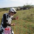 417. Platz | Halbmarathon | Walpurga M. (382) | mehr Menschlichkeit für Tiere