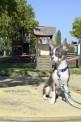 184. Platz | Marathon | Doggy Style (538) | am Spielplatz