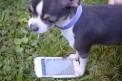184. Platz | Marathon | Doggy Style (538) | Wunder der Technik