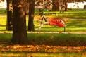 174. Place | Halbmarathon | Roman R. (605) | morgens in Wien