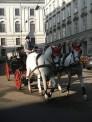 453. Place | Halbmarathon | Wuzi1 (609) | morgens in Wien
