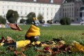 586. Place | Halbmarathon | DannyClick (645) | herbstliches Wien