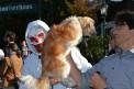 658. Platz | Halbmarathon | Sylvia Z. (671) | mehr Menschlichkeit für Tiere