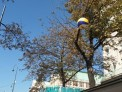 293. Platz | Marathon | Robert C. (72) | herbstliches Wien