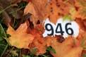 31. Platz - Tünde O. (946)
