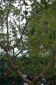 147. Place | Marathon | Manuel M. (1) | Baum-Bäume