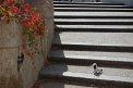 107. Place | Halbmarathon | Gerhard S. (101) | Stiegen-Stufen-Treppen