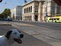 26. Place | Marathon | Michael K. (1023) | Die Wiener Ringstraße