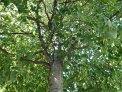 112. Platz | Marathon | Katrin K. (1035) | Baum-Bäume