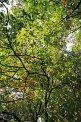 135. Place | Marathon | Alexevi (1036) | Baum-Bäume