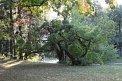 74. Platz | Marathon | Javier P. (1051) | Baum-Bäume