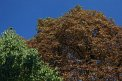 207. Place | Marathon | Jürgen A. (1055) | Baum-Bäume
