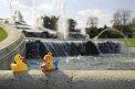 447. Place | Halbmarathon | Ducktales (1064) | Stiegen-Stufen-Treppen