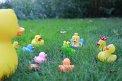 447. Place | Halbmarathon | Ducktales (1064) | am Boden