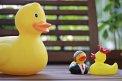 447. Platz | Halbmarathon | Ducktales (1064) | klein, aber oho
