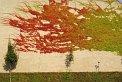 194. Place | Marathon | Andreas D. (1091) | Baum-Bäume