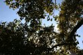 205. Place | Marathon | Petra H. (111) | Baum-Bäume