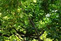 126. Place | Marathon | Klaudia Z. (130) | Baum-Bäume