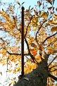 61. Platz | Marathon | Niklas T. (137) | Baum-Bäume