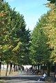 179. Platz | Marathon | alexAllesklar (153) | Baum-Bäume
