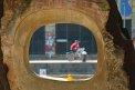 257. Place | Halbmarathon | Michael W. (171) | am Donaukanal