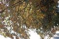 190. Place | Marathon | Birgit B. (186) | Baum-Bäume
