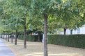 104. Platz | Marathon | Mel-anie (199) | Baum-Bäume