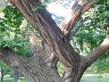 79. Place | Marathon | Marion K. (2) | Baum-Bäume