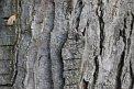 84. Platz | Marathon | Denise J. (200) | Baum-Bäume