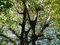 126. Platz | Marathon | Walter-Michael K. (242) | Baum-Bäume