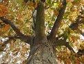 84. Platz | Marathon | OSKARIN (268) | Baum-Bäume