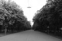 350. Place | Halbmarathon | Tota (292) | Weitblick