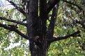 203. Platz | Marathon | Andrea D. (315) | Baum-Bäume