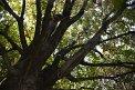 185. Platz | Marathon | Harald D. (316) | Baum-Bäume